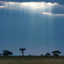 Masai Mara Sunrays  by Aidan Moran