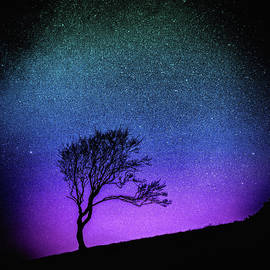 Susan Maxwell Schmidt - Starry Starry Night