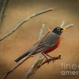 Stately American Robin by Sue Melvin