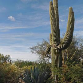 Gordon Beck - Stately Saguaro