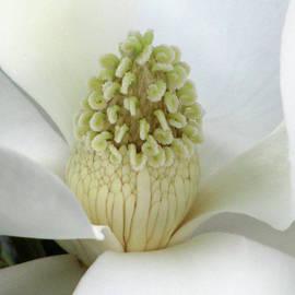 Pamela Critchlow - Steel Magnolia 24