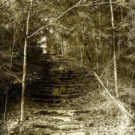 Steps to Wonderland by Sharon Popek
