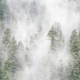 Bob Neiman - Stevens Pass Storm 6351
