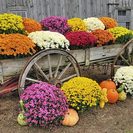 Dan Myers - Autumn Display