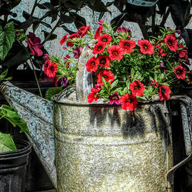 Still Life - Petunias in a Watering Can by Arlane Crump