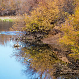 Still River Reflections by Cathy Franklin