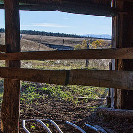 Stock Shed View by Alana Thrower