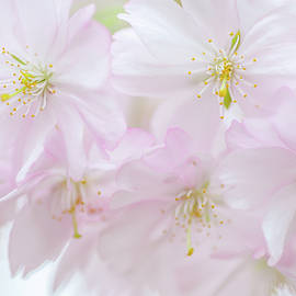 Stolen Glance. Spring Pastels by Jenny Rainbow