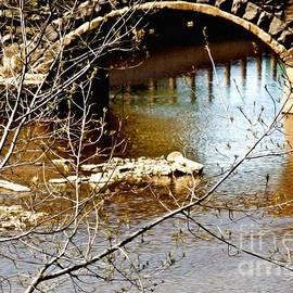 Tatiana Travelways - Stone bridge