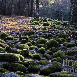 Valdis Veinbergs - Stone Path In The Forest 8