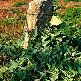 Lynne and Don Wright - Stone Post and Gourd Vine