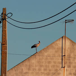 Stork On A Roof by Menega Sabidussi