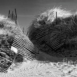 Joe Geraci - Storm Damaged Dune