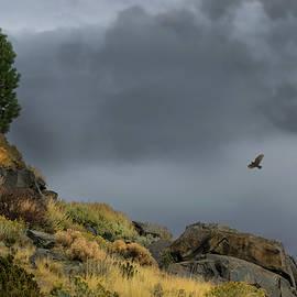 Stormy Flight by Frank Wilson