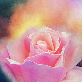 Terry Davis - Stormy Rose