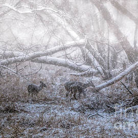 Elizabeth Winter - Stormy Woods