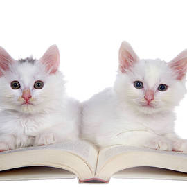 Story Time Kittens