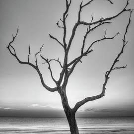 Stranded 2 Driftwood Beach Sunrise Jekyll Island Georgia Art by Reid Callaway