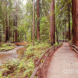 Silvio Ligutti - Strolling along Redwood Creek at Muir Woods National Monument - Mill Valley Marin County California