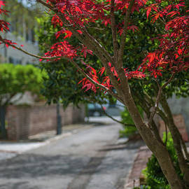 Dale Powell - Strolling Charleston Back Alleys in the Spring