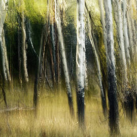 Study In Abstract No. 180, Yellowstone by Ann Skelton