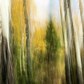 Study In Abstract No. 196, Yellowstone by Ann Skelton