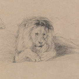 Study of a Lion and Study of a Lioness
