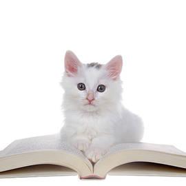 Study Time Kitten