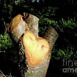 Ruth Housley - Stump Shaped Like A Heart