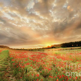 Stunning poppy field at sunrise in Norfolk UK by Simon Bratt Photography LRPS