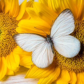 Stunning White Butterfly - Garry Gay