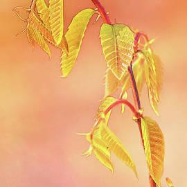 Anita Pollak - Stylized Baby Chestnut Leaves