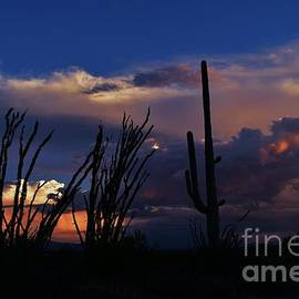 Janet Marie - Sublime Sonoran Sunset