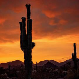 Sublime Sonoran Sunset  by Saija Lehtonen