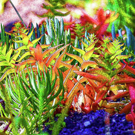 Succulent Garden Painterly I by Linda Brody