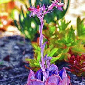 Linda Brody - Succulent Garden Painterly II