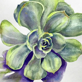 Hilda Vandergriff - Succulent Plant