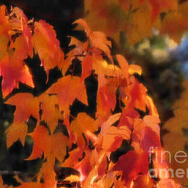 Sugar Maple in Autumn by Sandra Huston