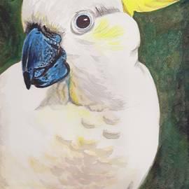 Anne Gardner - Sulphur crested cockatoo