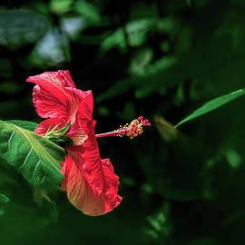 Wes Iversen - Summer Beauty