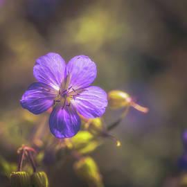 Summer Blue - Chris Fletcher