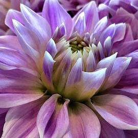 Summer Dahlia by Bruce Bley