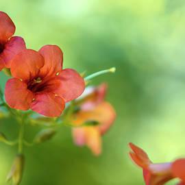 Summer Flowers - Nailia Schwarz