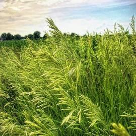 Luther Fine Art - Summer Grass