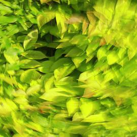 Dan Sproul - Summer Green Blur