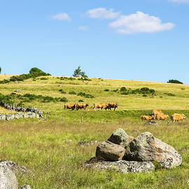 Paul MAURICE - Summer In Aubrac # II - France
