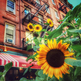 Summer in the City - Sunflowers by Miriam Danar