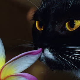 Summer Sniffing Plumaria by Larah McElroy