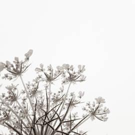 Holly Ross - Summer Snow II
