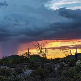 Saija Lehtonen - Sonoran Summer Sunset